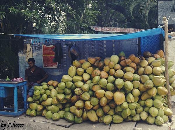 Vanzator-de-nuci-de-cocos-India