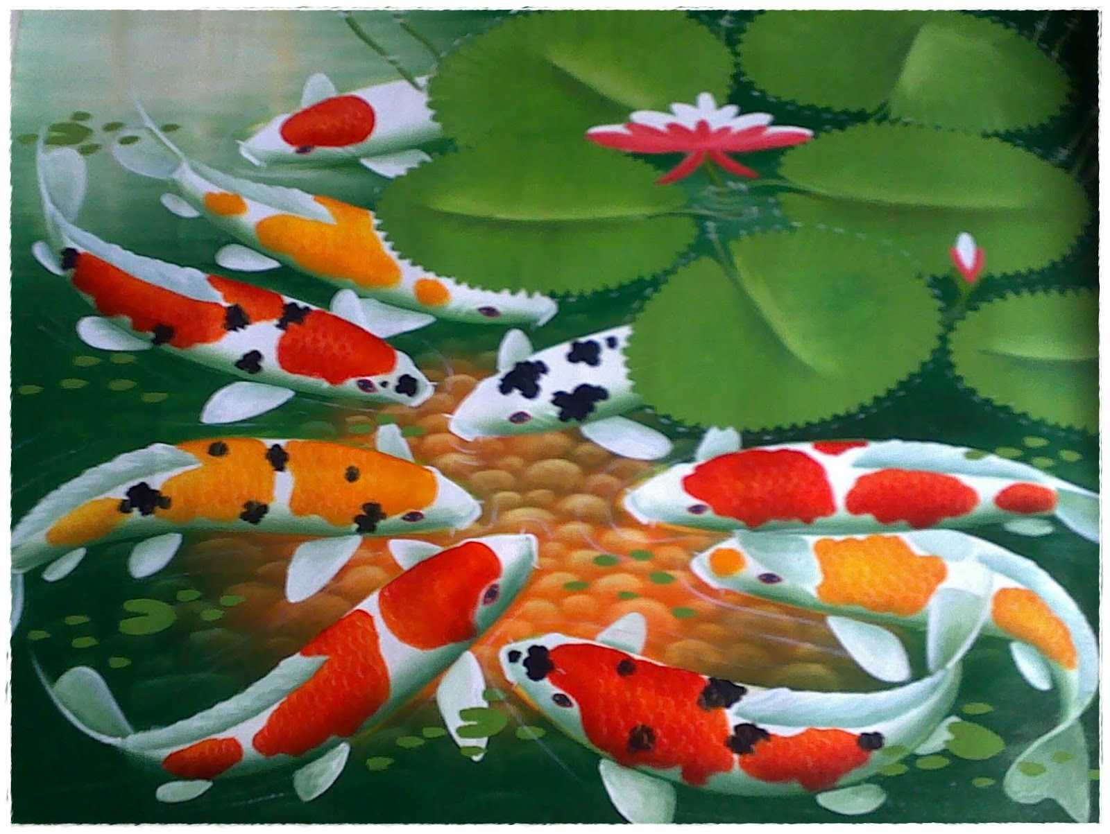 Ikan Koi Hidup Di Air