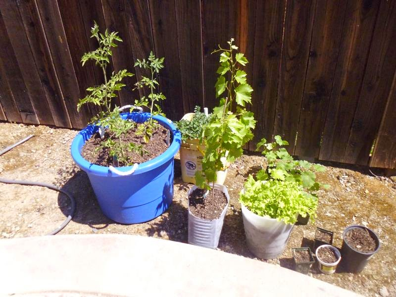 Garden after relocation