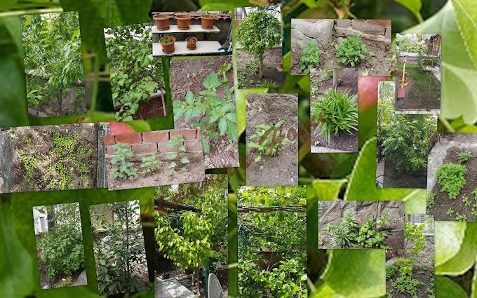 Bahçemden manzaralar....