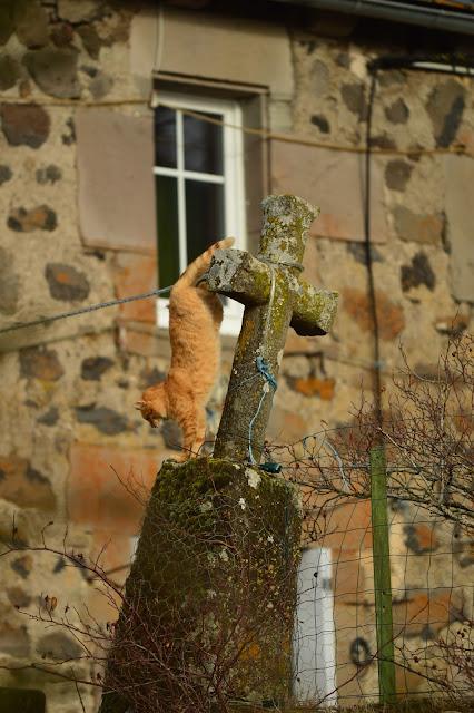 Chat sur une croix dans un village du Cantal
