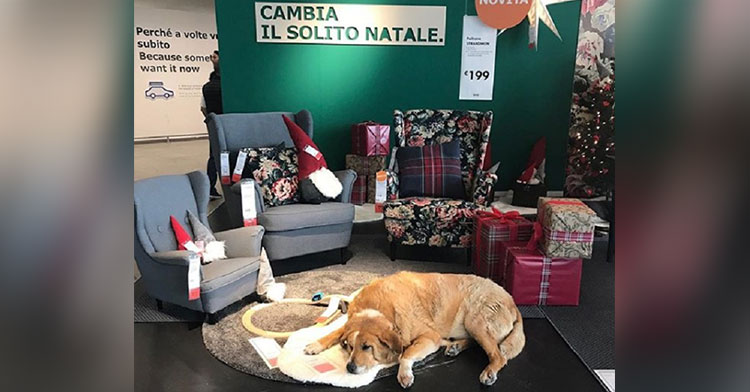 IKEA Lets Strays Sleep In Displays To Stay Warm And Their Pictures Are Heartwarming