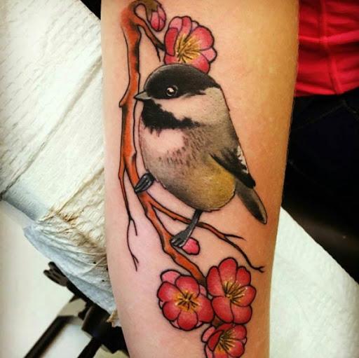 Este pequeno pássaro num ramo de flor de cerejeira