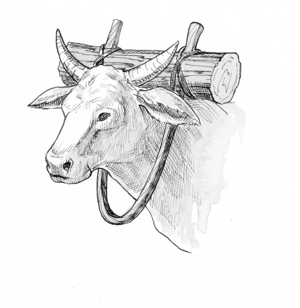 A yoke is a wooden implement used by a farmer to harness a working animal such as an ox or donkey so it can drag a plough and rake up the soil in preparation for planting seeds.