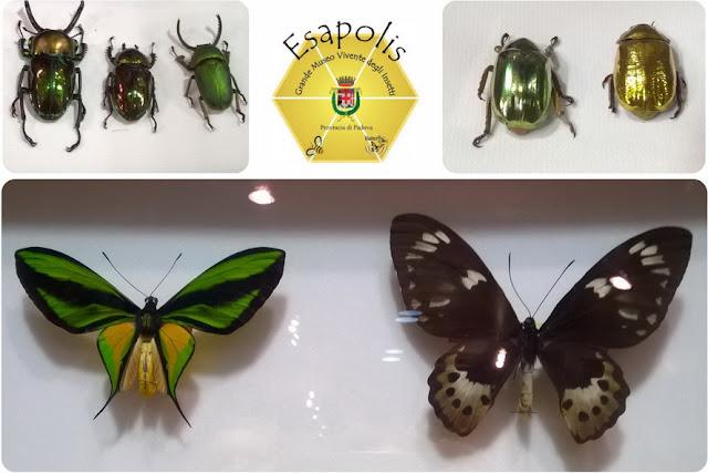 scarabeo d'oro e argento