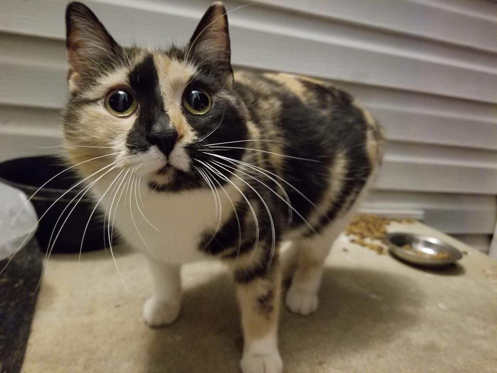Funny cats - part 323, cute cat pictures, best cat photos