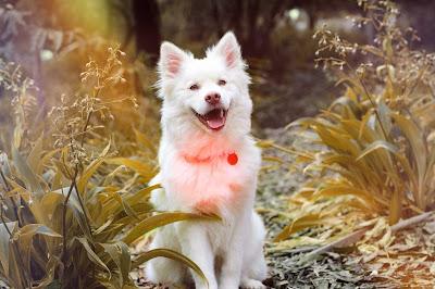 perritos para colorear, perros tiernos, imagenes de perro, imagen de un perro, imagenes de un perro