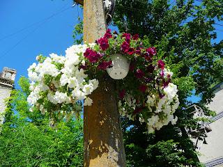 Калуш. Вулиці прикрашені вазонами з квітами