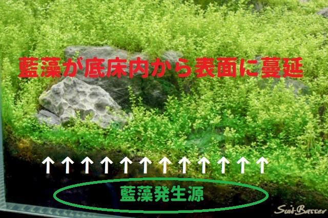 藍藻発生源