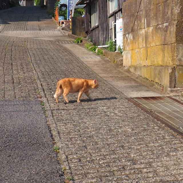 銚子 外川 港への坂道 ネコ