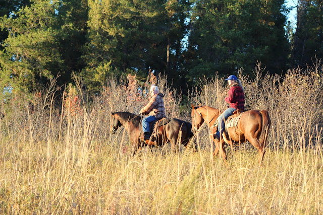 Horse back riders on hills, in front of evergreen trees