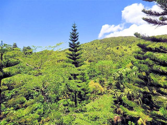 Black River George Nationalpark Mauritius (C) JUREBU