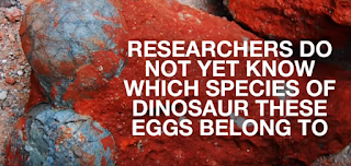 Chinese eggs from a dinosaur.
