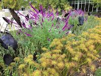 indy ima gardens