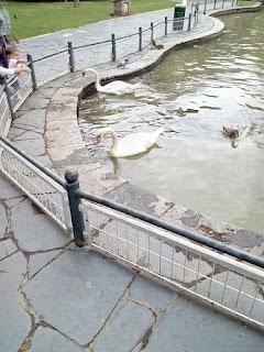 estanque de los patos del parque