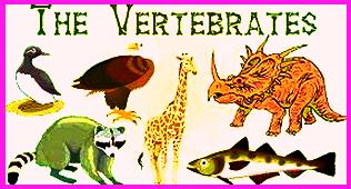 Pernapasan Pada Vertebrata dan Pernapasan Pada Avertebrata