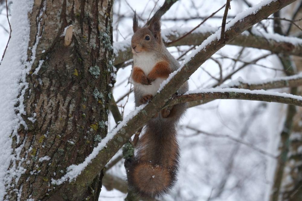 Orava Unessa