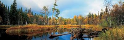 Сердце лесов