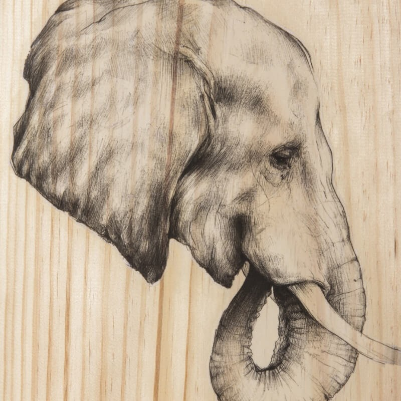 05-The-Elephant-Martina-Billi-Animal-Drawings-on-Recycled-Wooden-Planks-www-designstack-co