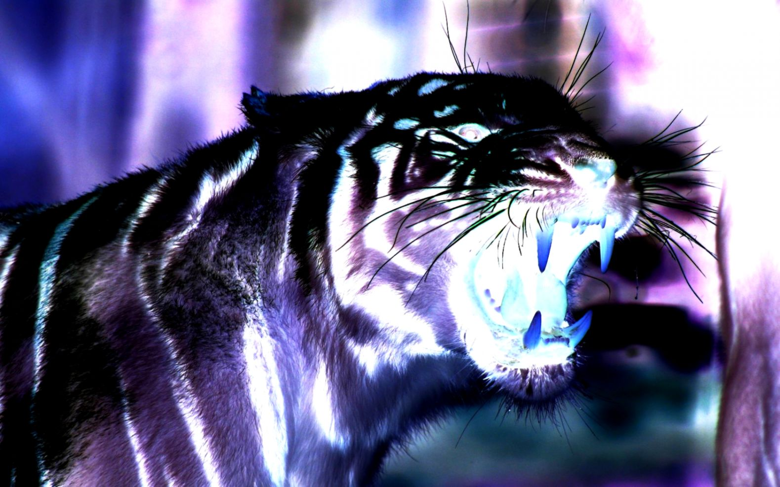 3d Tiger Wallpapers Download Free