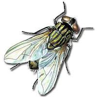 Code con ruồi bò trên blogspot/web
