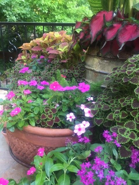 Rose Siena Garden 377-111 zinkgießkanne à moitié zinkblech