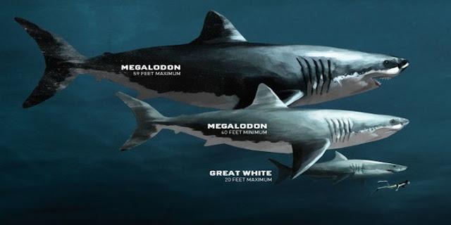 foto hiu megalodon asli