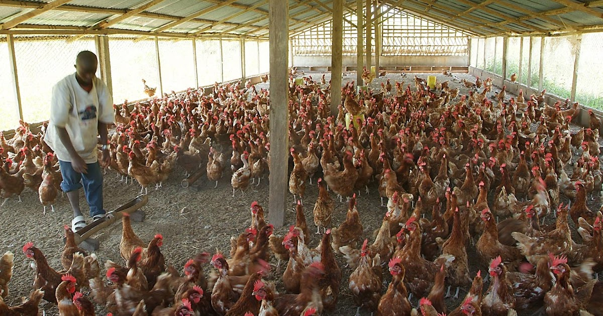 Incubator For Chicken Eggs In The Philippines Makers