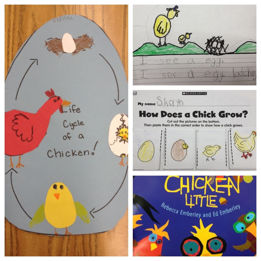 Life Cycle Of A Chicken Worksheets For Kids