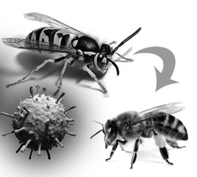 Ιός moku: Νέα απειλή για τις μέλισσες...