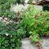 Nyári pillanatok a Dekor&Mentha kertből
