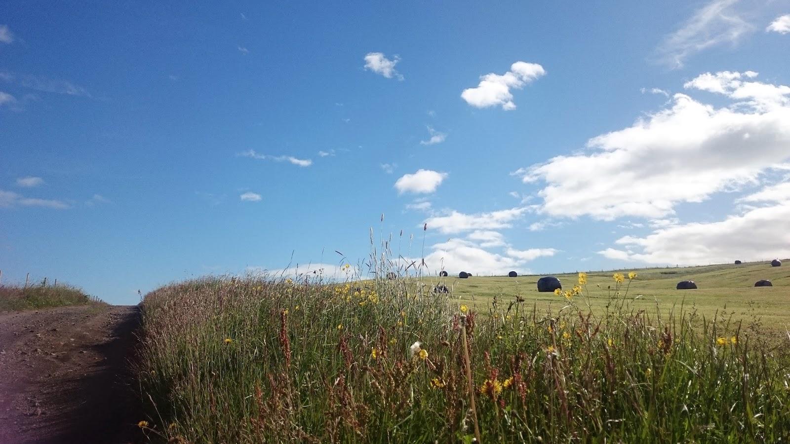 islandzki krajobraz, Islandia, lato w Islandii
