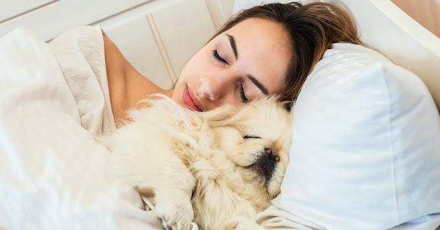 Las mujeres podrían dormir mejor al lado de sus perros que con su pareja, según estudios