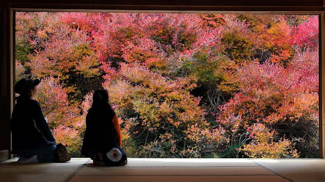 Art Frame of Autumn leaves at Ankoku Temple, Hyogo