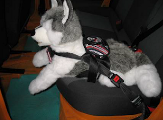 transporte de animais cães