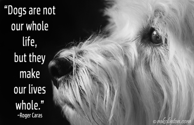 White Westie with Roger Caras quote