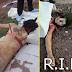 ฆ่าข่มขืน สาววัยรุ่น ปาดคอมีดแทงศพ ทิ้งนอนเปลือย ที่ บางขุนเทียน