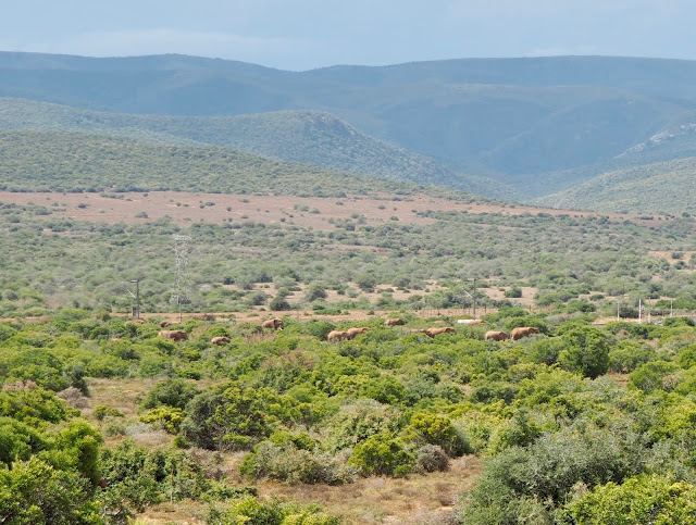 Elephant herd in Addo Elephant National Park, South Africa