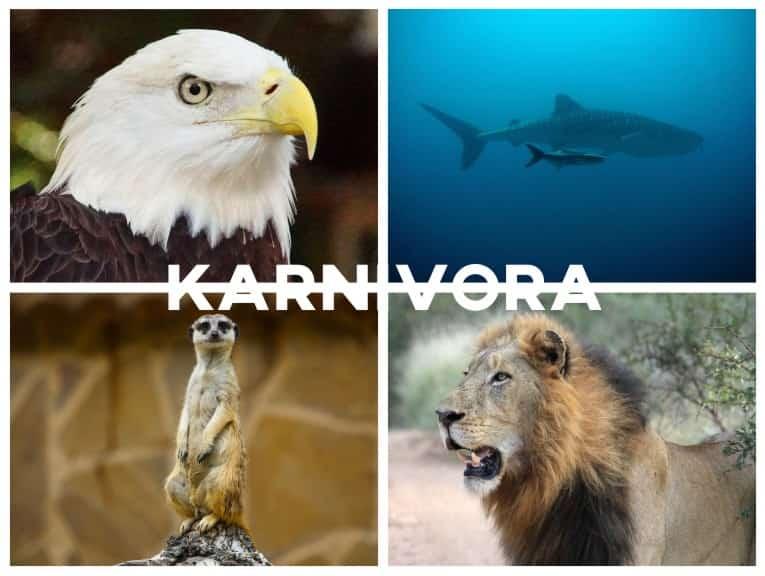 Karnivora