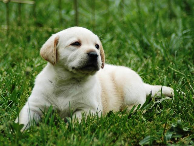 puppy lovely background