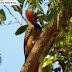 Biólogo registra 14 espécies de aves ameaçadas de extinção na APA do Lago de Palmas/TO