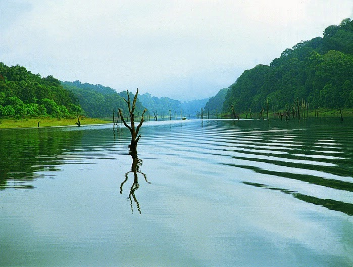 thekkady guide service, thekkady tour guide booking, tour guides in thekkady, tourist guides in thekkady, how to ook a tour guide for thekkady
