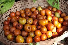 plum(ber) benefits in urdu