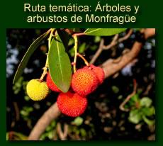 http://iberian-nature.blogspot.com.es/p/ruta-tematica-arboles-y-arbustos-de_2.html