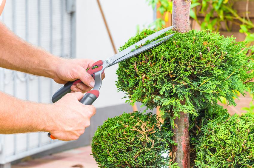 10 herramientas básicas para jardinería - Amigos de la Jardinería