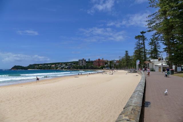 Manly, Beach, Strand, Meer, Promenade, Steynes, Norfolk, Tannen