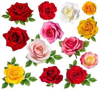 ורדים בכל מיני צבעים