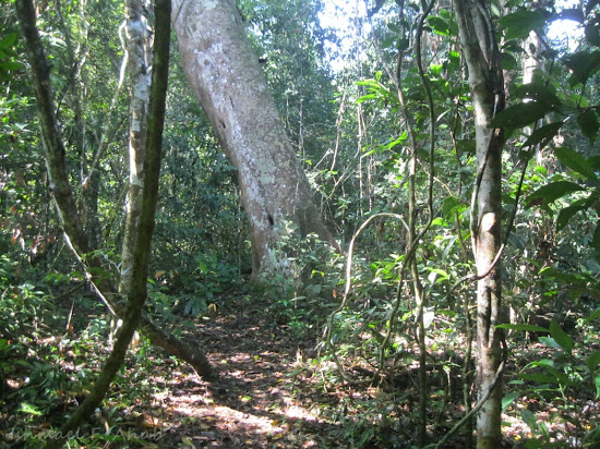 Thick vegetation inside Phukhieo Wildlife Sanctuary