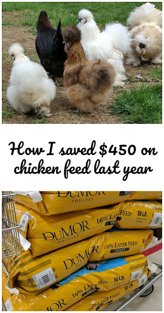 save money on chicken feed
