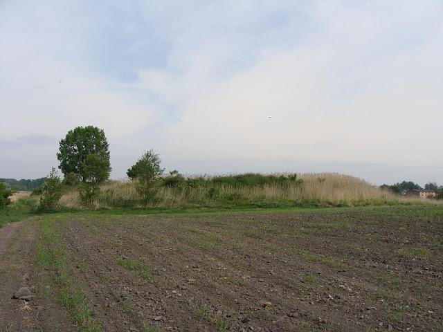 Piastowskie grodzisko na półwyspie Szyja, we wsi Bnin, dziś dzielnica Kórnika
